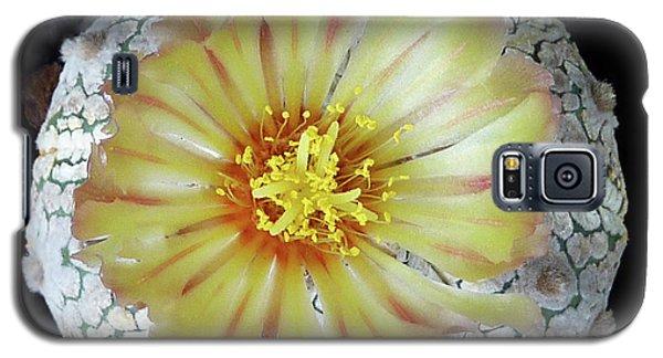 Cactus Flower 2 Galaxy S5 Case by Selena Boron