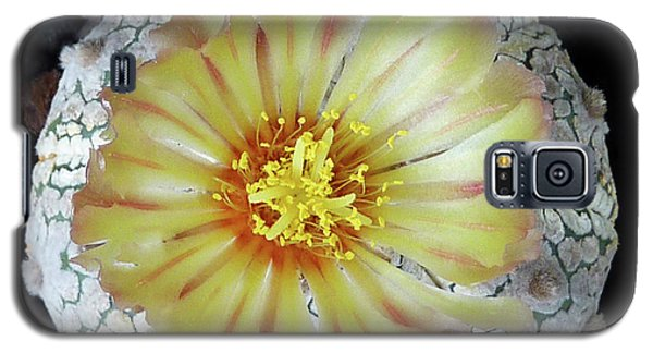 Cactus Flower 2 Galaxy S5 Case