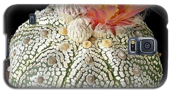 Cactus Flower 4 Galaxy S5 Case by Selena Boron