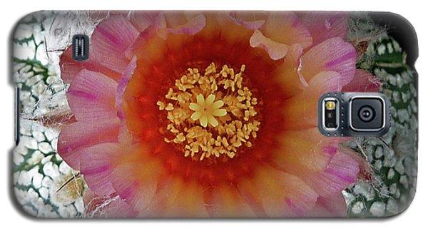 Cactus Flower 5 Galaxy S5 Case by Selena Boron