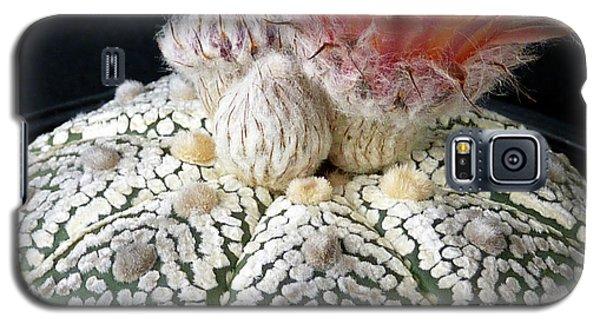 Cactus Flower 6 Galaxy S5 Case by Selena Boron