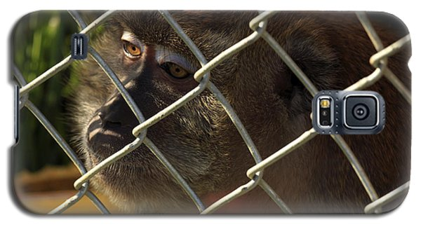 Caged Monkey Galaxy S5 Case