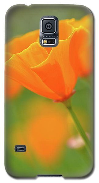 California Spring Poppy Macro Close Up Galaxy S5 Case