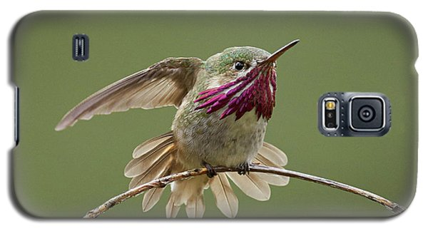 Calliope Hummingbird Galaxy S5 Case by Doug Herr