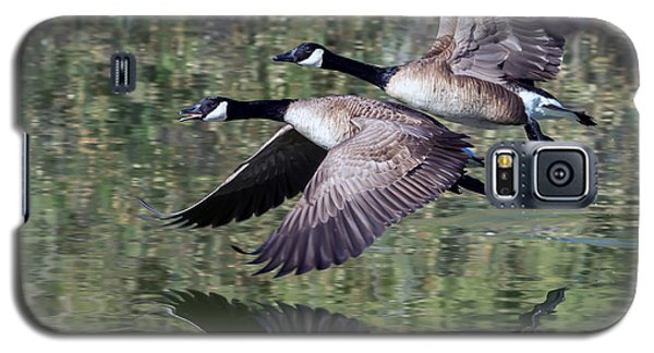 Canada Geese Galaxy S5 Case by Tam Ryan