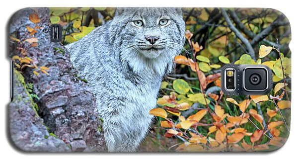 Canada Lynx Galaxy S5 Case by Jack Bell