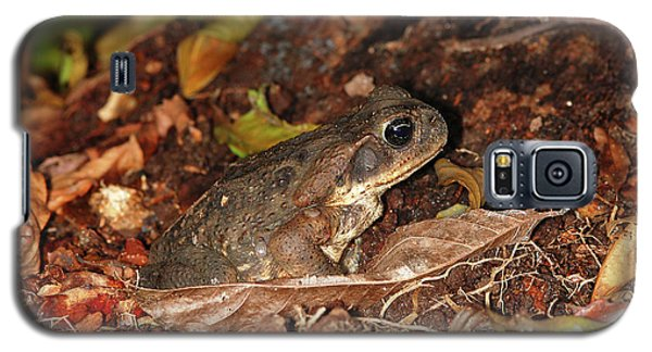 Galaxy S5 Case featuring the photograph Cane Toad by Breck Bartholomew