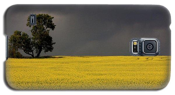 Canola Storm Galaxy S5 Case