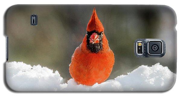 Cardinal In Snow Galaxy S5 Case