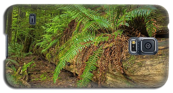 Cathedral Grove Galaxy S5 Case