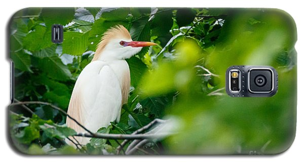 Cattle Egret At Rest Galaxy S5 Case