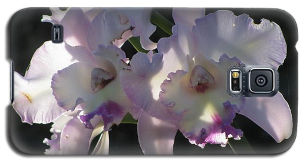 Cattleya Orchid Galaxy S5 Case