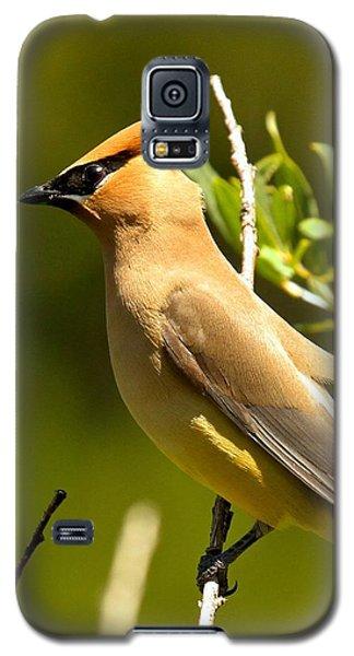 Cedar Waxwing Closeup Galaxy S5 Case by Adam Jewell