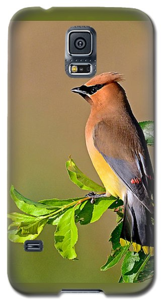 Cedar Waxwing Galaxy S5 Case by Rodney Campbell
