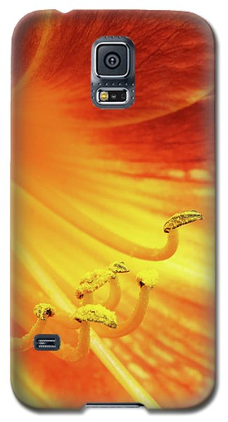 Center Of A Lily Galaxy S5 Case