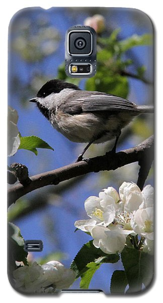 Chickadee Among The Blossoms Galaxy S5 Case by Doris Potter