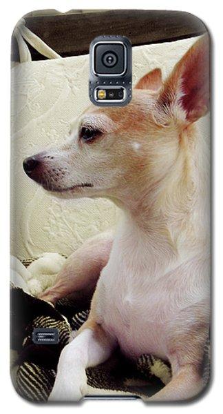 Chihuahua Chiqui Portrait 3 Galaxy S5 Case