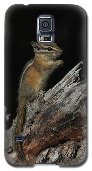 Galaxy S5 Case featuring the photograph Chipmunk by Angie Vogel