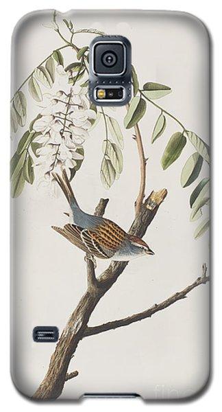 Chipping Sparrow Galaxy S5 Case by John James Audubon