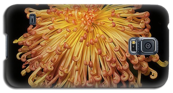 Chrysanthemum Galaxy S5 Case