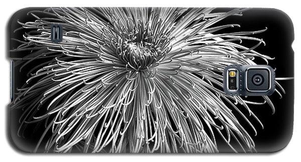 Chrysanthemum 'pink Splendor' Galaxy S5 Case