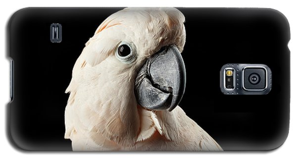 Closeup Head Of Beautiful Moluccan Cockatoo, Pink Salmon-crested Parrot Isolated On Black Background Galaxy S5 Case