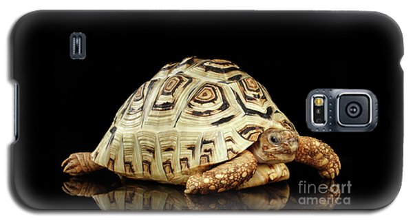 Closeup Leopard Tortoise Albino,stigmochelys Pardalis Turtle With White Shell On Isolated Black Back Galaxy S5 Case by Sergey Taran