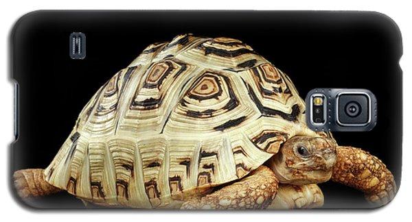 Closeup Leopard Tortoise Albino,stigmochelys Pardalis Turtle With White Shell On Isolated Black Back Galaxy S5 Case