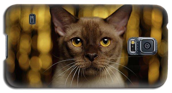 Closeup Portrait Burmese Cat On Happy New Year Background Galaxy S5 Case