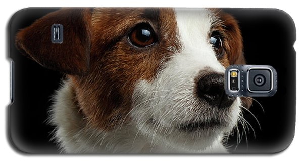 Closeup Portrait Of Jack Russell Terrier Dog On Black Galaxy S5 Case