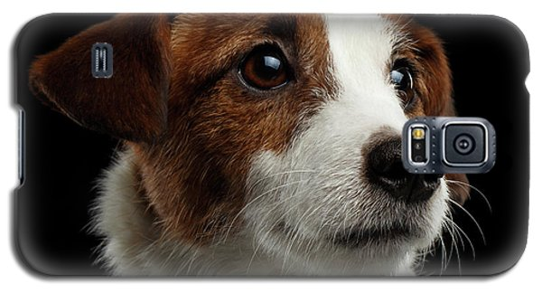 Dog Galaxy S5 Case -  Closeup Portrait Of Jack Russell Terrier Dog On Black by Sergey Taran