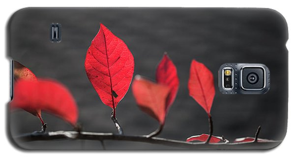 Galaxy S5 Case featuring the photograph Colorful Tree Leaves Changing Color For Auyumn,fall Season In Oc by Jingjits Photography