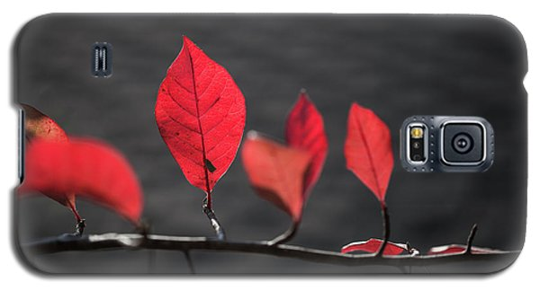 Colorful Tree Leaves Changing Color For Auyumn,fall Season In Oc Galaxy S5 Case