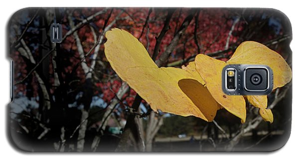 Colors Of Fall Galaxy S5 Case by Joseph G Holland