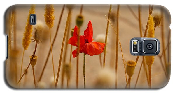 Cretan Flower  Galaxy S5 Case by David Warrington