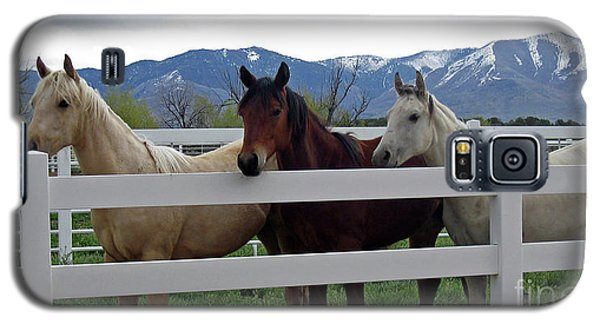 Galaxy S5 Case featuring the photograph Curious Yearlings by Juls Adams