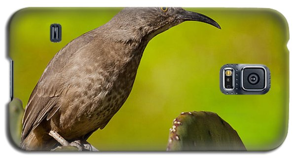 Curve-billed Thrasher On A Prickly Pear Cactus Galaxy S5 Case