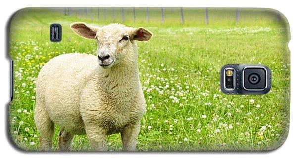 Sheep Galaxy S5 Case - Cute Young Sheep by Elena Elisseeva