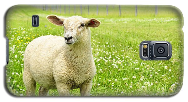 Cute Young Sheep Galaxy S5 Case