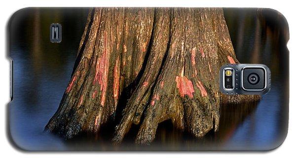 Cypress Tree Galaxy S5 Case
