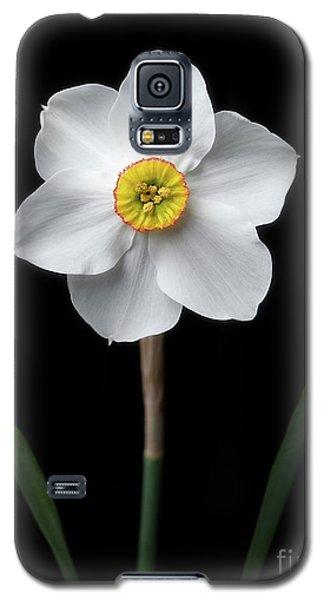 Daffodil 'cantabile' Galaxy S5 Case