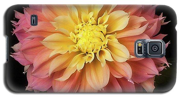 Dahlia 'kogane Fubuki' Galaxy S5 Case