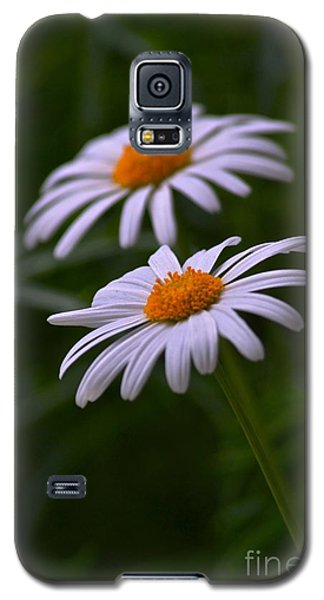 Daisies Galaxy S5 Case by Tim Good
