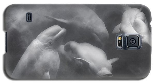 Dancing Belugas  Galaxy S5 Case by Betsy Knapp