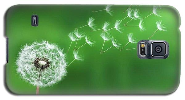 Dandelion Seeds Galaxy S5 Case by Bess Hamiti