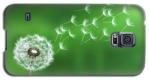 Galaxy S5 Case featuring the photograph Dandelion Seeds by Bess Hamiti