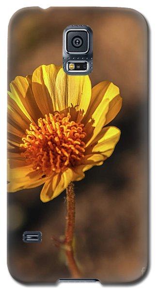 Galaxy S5 Case featuring the photograph Desert Sunflower by Robert Bales