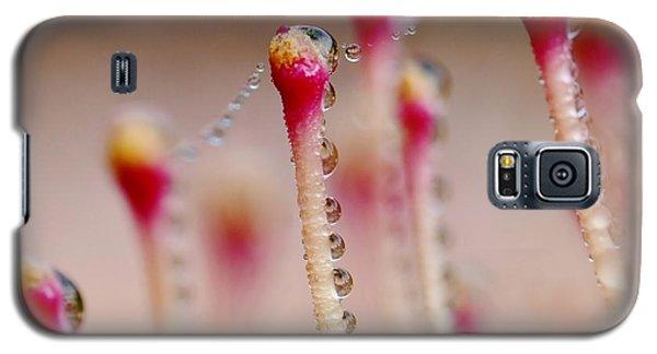 Dew Drops In A Row... Galaxy S5 Case by Werner Lehmann