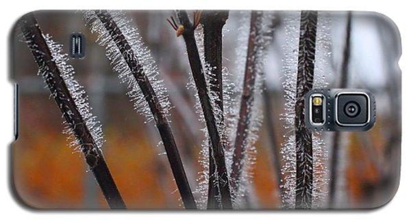 Dewdrops Galaxy S5 Case by Kathryn Meyer