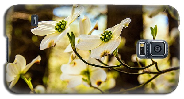 Galaxy S5 Case featuring the photograph Dogwood Day Afternoon by John Harding